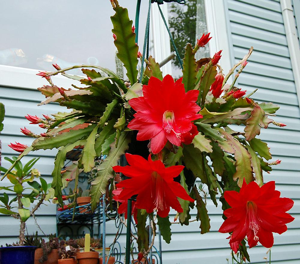 цветок плоский фото
