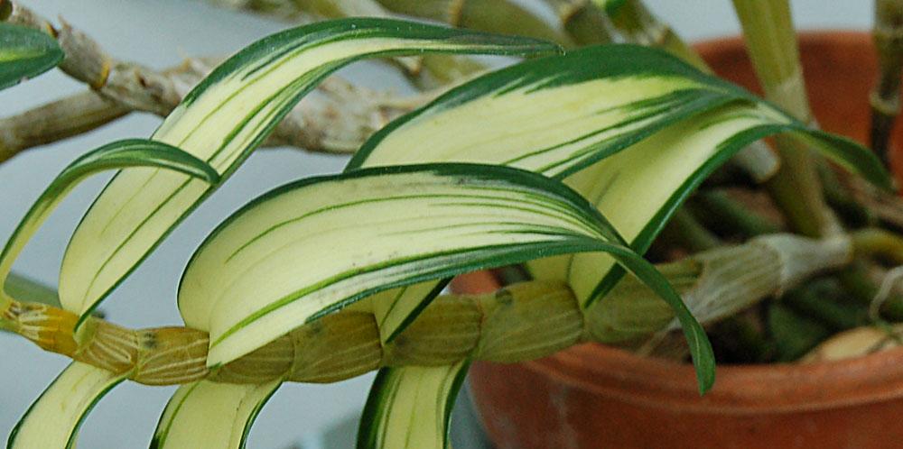 http://www.kammlott.net/Feb2009/DenmoniliWCl.jpg