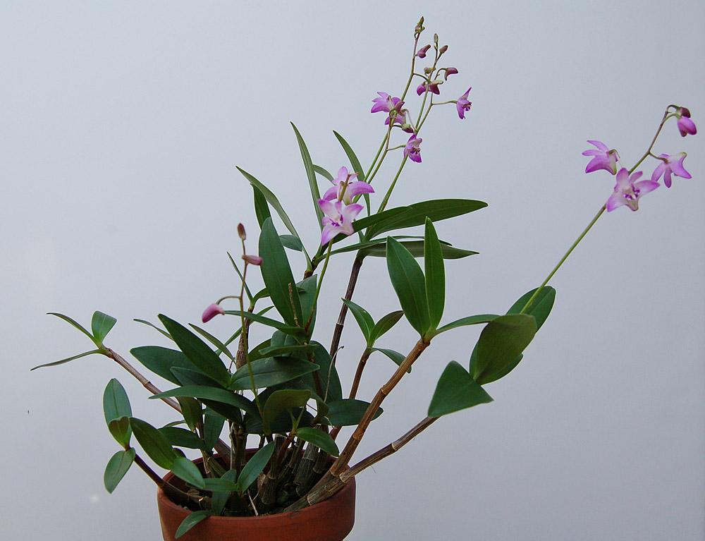 http://www.kammlott.net/Jan2010/DkBHpl.jpg