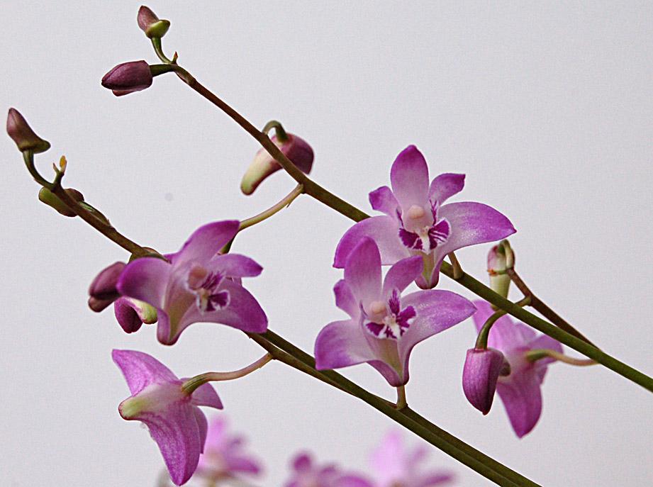 http://www.kammlott.net/Jan2010/DkBHsp2.jpg