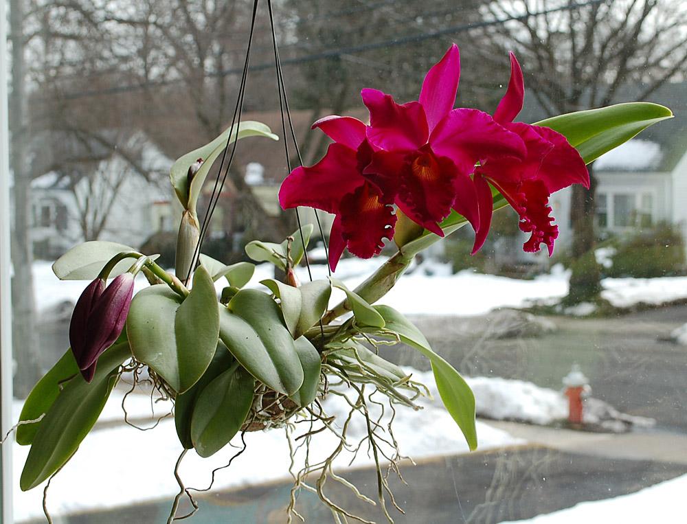 http://www.kammlott.net/March2010/PotRedHeartNpl.jpg