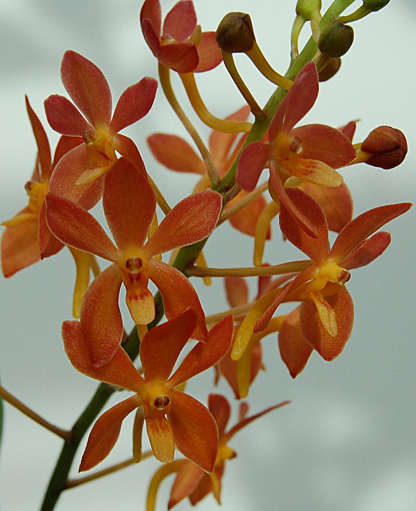http://www.kammlott.net/Nov2009/AscofinLionStarsp.jpg